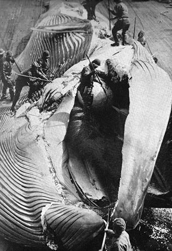 鯨油の歴史